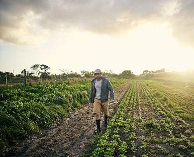 Fields of Corns Dunescapes